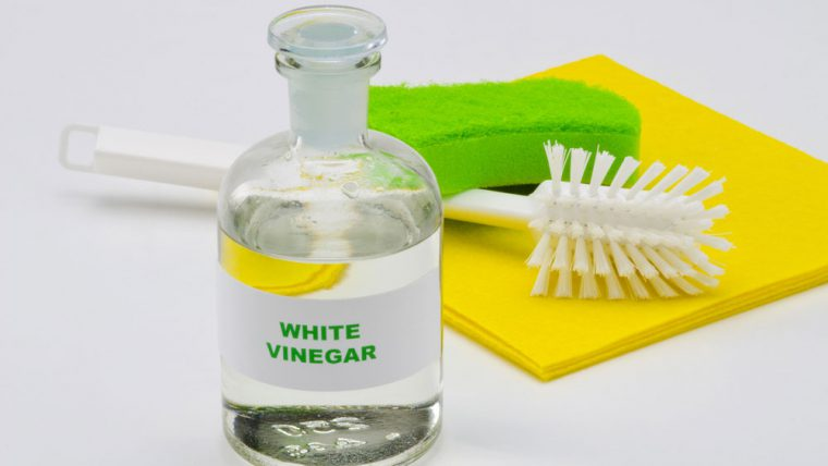 Cleaning Mold with Vinegar